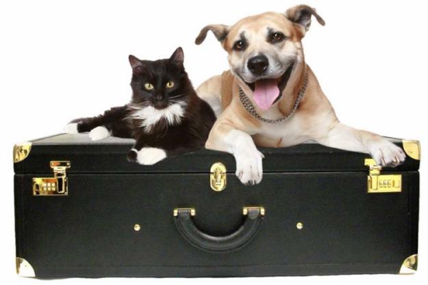 Основные правила перевозки животных