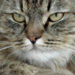 Аэрофлот узнал о факте перевозки кота с избыточным весом и решил наказать пассажира